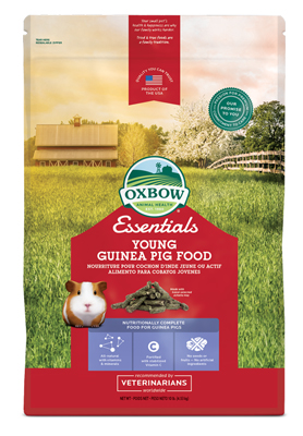 oxbow essentials young guinea pig
