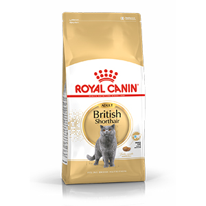 Royal canin british shorthair dry food